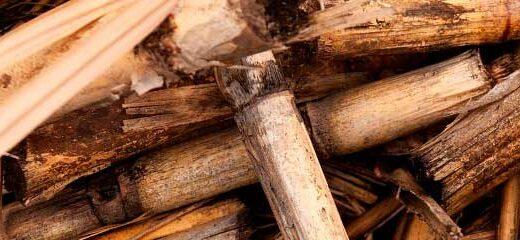 cabecera-biomasa-blogseas